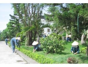 Chăm sóc và bảo dưỡng cây xanh
