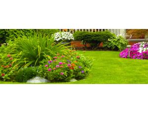 Dịch vụ chăm sóc, bảo dưỡng cây ở sân vườn biệt thự